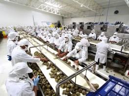 Nueva ruta de comercio para productos agrícolas frescos se abre desde el Perú a Portmiami