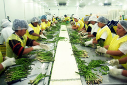 """Ministra Magali Silva: """"Exportaciones agropecuarias no tradicionales completaron 21 meses de crecimiento consecutivo a marzo del 2015"""""""
