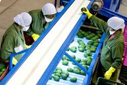 Ministra Silva anuncia inicio de funciones de especialistas agrícolas en Oficinas Comerciales del Perú en el Exterior