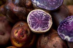 Las papas nativas, crujientes hongos de Porcón y la quinua se lucirán en la Expo in Cittá de Milán