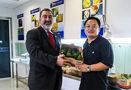 Primer contenedor de palta peruana llegó a China y pasa por inspección fitosanitaria