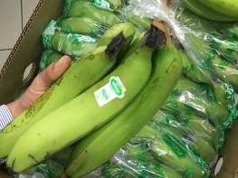 Llega primer embarque de banano orgánico a Portugal