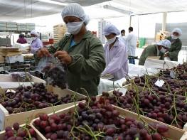Mincetur capacitará a empresarios de Arequipa, Moquegua y Tacna para facilitar ingreso de productos agrícolas al mercado brasilero