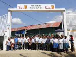 Productores del Vraem exportarán 400 toneladas de piña fresca certificada