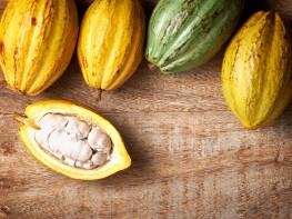 Cacao Chuncho del Cusco ingresará a mercados internacionales con marca colectiva Kall Kakao