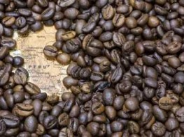 Productores de Junín enviarán 35 toneladas de café especial al Reino Unido