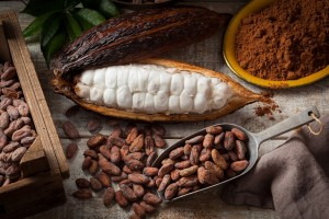 foto cacao